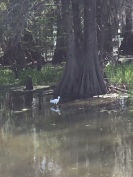 LA_Swamp